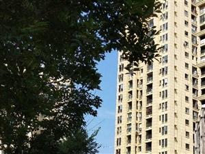 龙润国际大三室租2000,房东可以免一个季度的装修期
