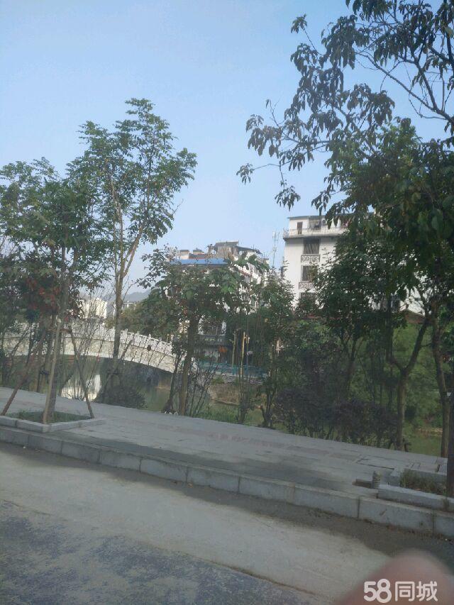 出售巴马县寿乡大道天地楼一栋,建筑面积540平米