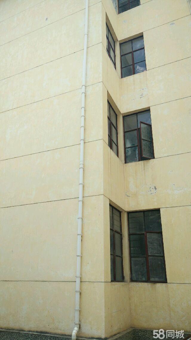 原金华镇政府后院4室2厅1卫1厨1阳台