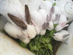 呆萌小兔只賣傲嬌價格
