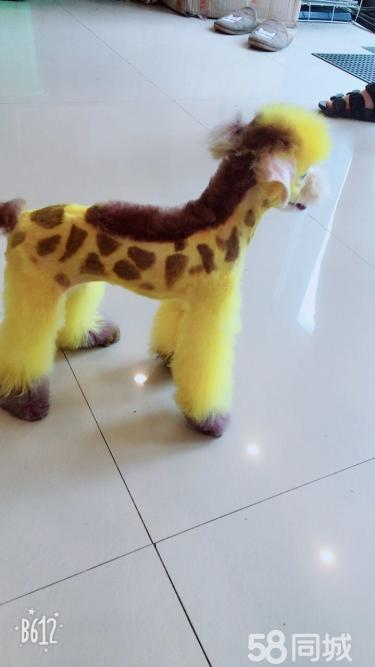 7夕送给女朋友只长颈鹿吧