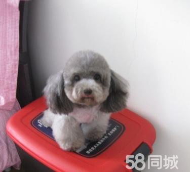 一狗在手 泰迪 说走就走