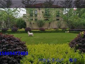 宁波杭州湾绿城惠园均价9500送车位别墅均价9500
