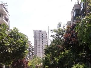 建国鑫居茶城小区,高层电梯房精装修家具家电齐全拎包入住