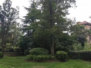 豪华别墅优价出售送超大花园