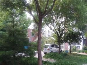 南池公园西邻新楼商品房下证过户开口费物业已交