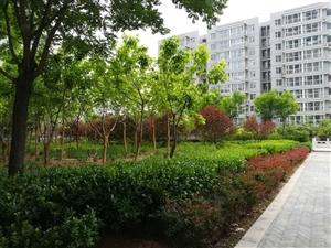 世纪花园环境美,格局好,六层共26层,