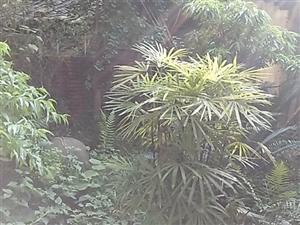 上西河带园子的天地房4层半性价比高