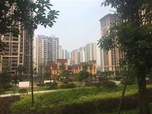 急售城北广二中附近、三室两厅两卫、明年接房、可网签按揭
