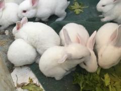 呆萌小兔 只賣傲嬌價格