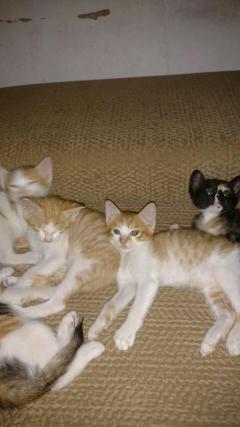 家养小猫咪健康活泼可爱
