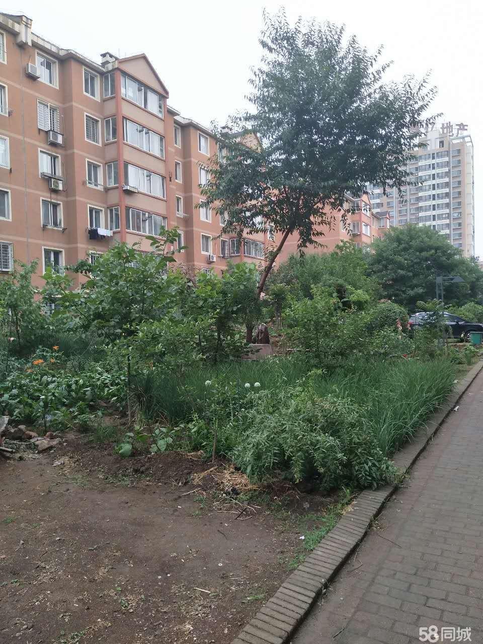 连山区医院东方国际花园1室1厅42平米简单装修面议
