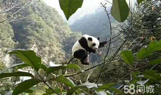首付14万+景区电梯现房+周边18个景点+熊猫古城