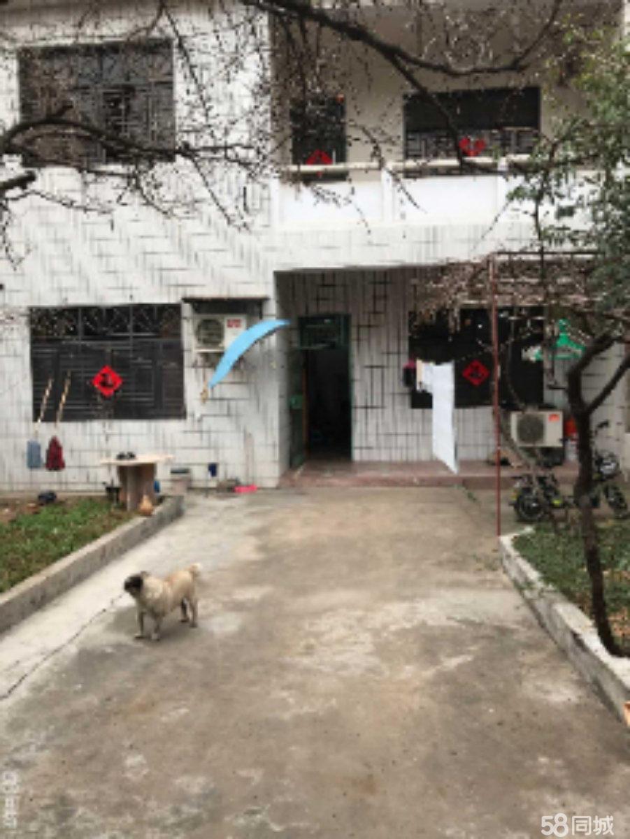 涡阳老猫狗市场向西路南5室1厅2卫210平米
