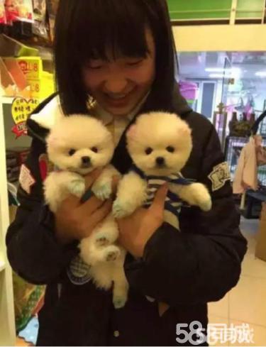 !!惠州最大养狗基地 出售三十多个品种狗狗 包健康