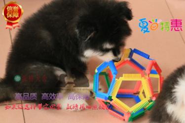 頂級大骨架阿拉斯加幼犬 包純種保健康 可簽合同