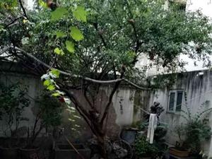 辽河路许慎农贸市场独家院4室2厅300平月租1000元