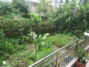 奥城5+1多层装修房带前后超大花园,关门卖!业主急用钱!