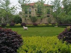 宁波杭州湾绿城惠园均价9300送车位别墅均价12000
