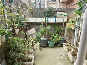 葡萄园带院子,阳光房,拎包入住,满五唯一