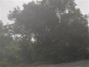翠竹家园旁边靠近滨江公园八中翠竹园小区