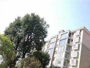 公园小区0公摊南北通透户型126居家舒适3房