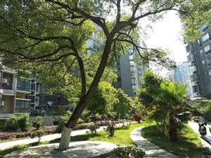 出售印象巴黎3室2厅2卫的园景房