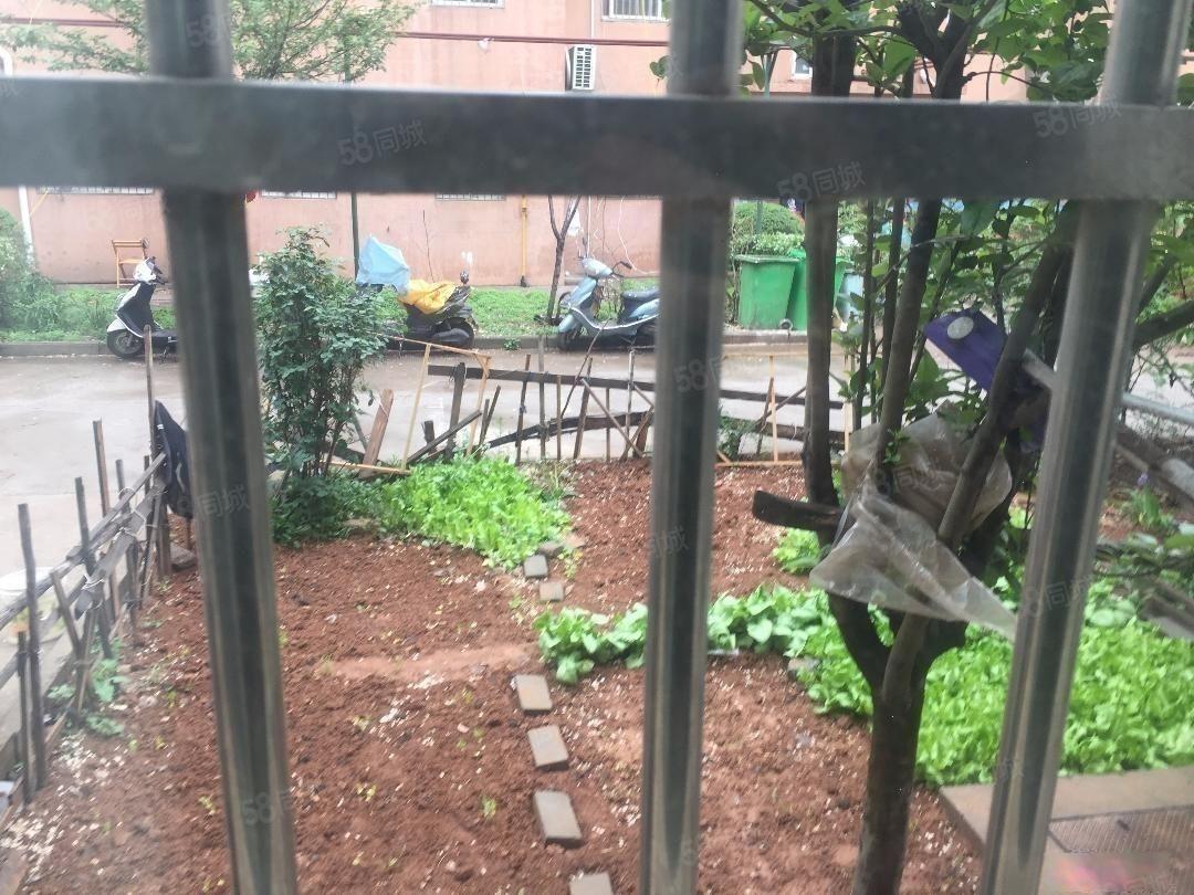 王城大道阳光家园一楼精装带花园南北朝向实图拍摄