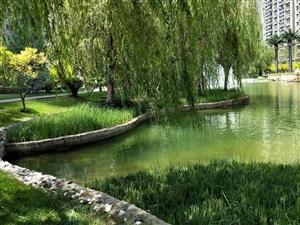 东城恒大黄河生态城东凯小学中学幼儿园商场