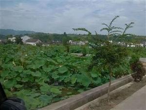 竹山县大寿康超市背后可办公可住宅可做仓库40平米