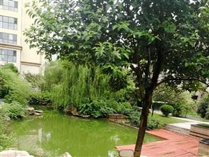 急售锦绣外滩沂河观邸24中学区房有证可贷款