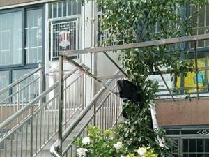 学校房幸福花城C区一楼带院子精装修南北通透双气双证证过两年