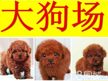【只收疫苗费】广东最大狗场解散==20几种幼犬处理