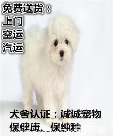 不�u病(bing)狗―不�u串(chuan) 健康保�K身 大(da)眼比(bi)熊多(duo)只可�x