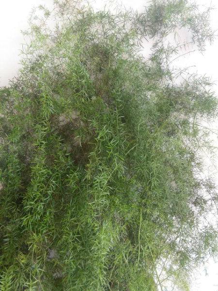 黑龙潭中段小院上下两层