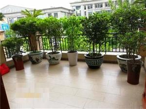恒大绿洲+一期稀1缺花园洋房+全新豪华装修+房东诚心出售