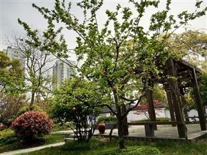 匠心打造中式园林联排别墅(翰林苑)低调不缺奢华教授之乡
