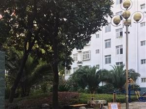 西大街小学,汉四中学位房,公摊小使用率高,价格美丽