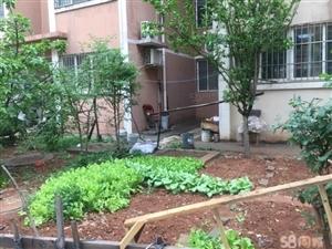 阳光家园精装修一楼送花园双气南北通透手续全可贷款