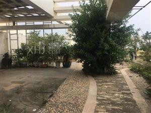紫荆花园一期出门千赢娱乐湾滨海大道办公区跃层5房1.3万
