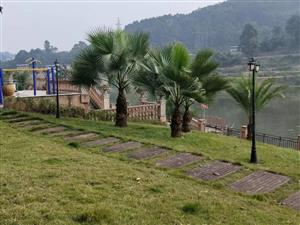 泸县二中二外旁龙城御庭,河边一楼带前后大花园