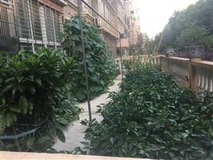 龙泉山庄前后带花园80平方满5唯一
