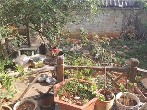 瑞凤小区带100平花园1跃2错过没有带装修满俩年双证齐全