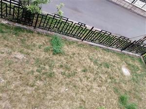 伊顿庄园,一二复式,大院子,随时看房.亳州南部新区高端社区