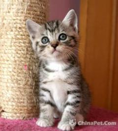 长期便宜出售家养健康小猫