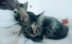可爱的小猫咪金沙官方平台
