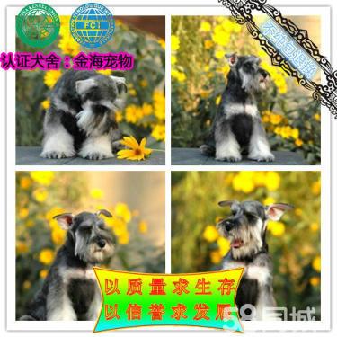 出售雪纳瑞犬、疫苗做齐【质保签协议】可看狗父母