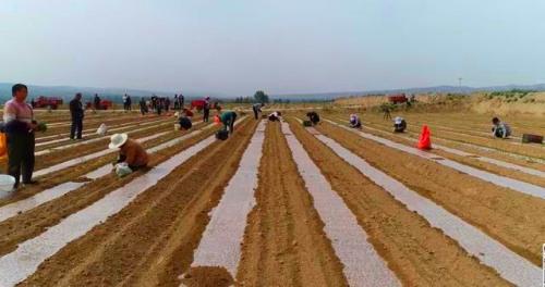 府谷县段寨村:发展合作经济强了集体富了村民