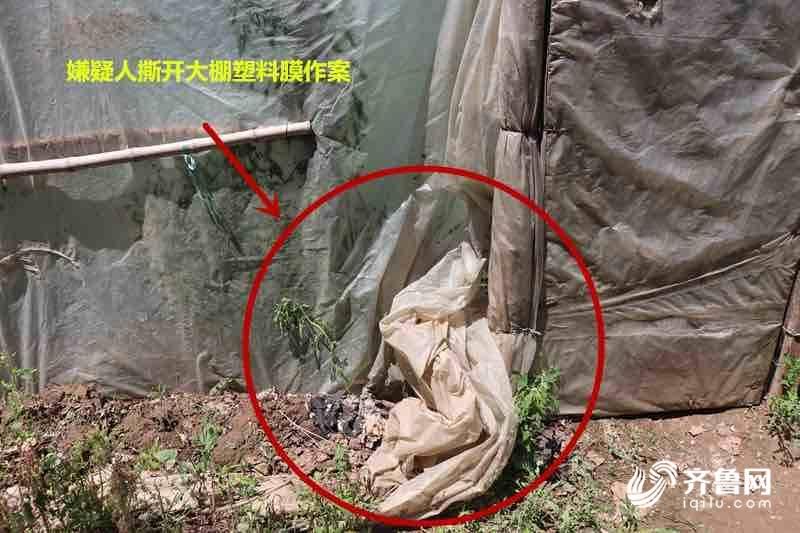 高青农民300斤大西瓜被偷民警获重要线索后破案