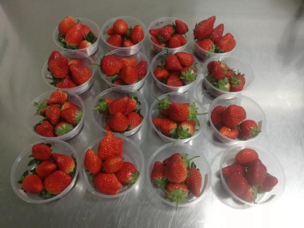 草莓不洗能直接吃��?看完�@�����就明白